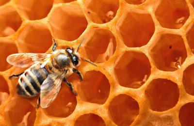 20160225154106-abelhas